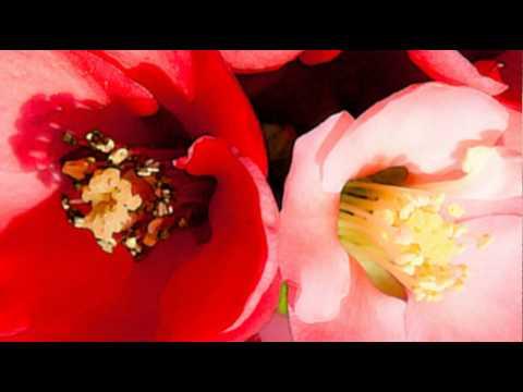 Pan Flute & Organ - Barbirolli: Concerto in F on a theme ...
