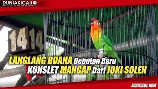PENDATANG BARU!! LANGLANG BUANA Konslet MANGAP Debutan JOKI SOLEH