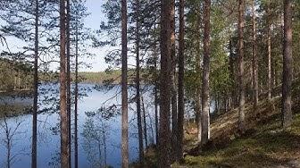 Kielinuppu - Suomalainen metsä