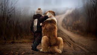 Самые большие породы собак в мире.