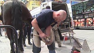Как подковывают полицейских лошадей в Нью-Йорке