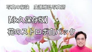 写真の秘訣 廣瀬雅弘写真術→http://www.masahirohirose.com 今回の花の...