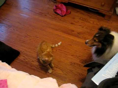 best friends: cat and dog playing