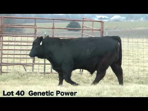 Lot 40 D700 JBarM Genetic Power