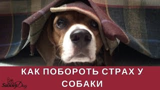 Что, если собака чего-то испугалась? Как побороть страх у собаки?