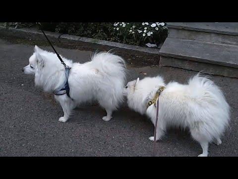 لماذا يفعل كلبك هذا؟ (تفسير 10 سلوكيات)