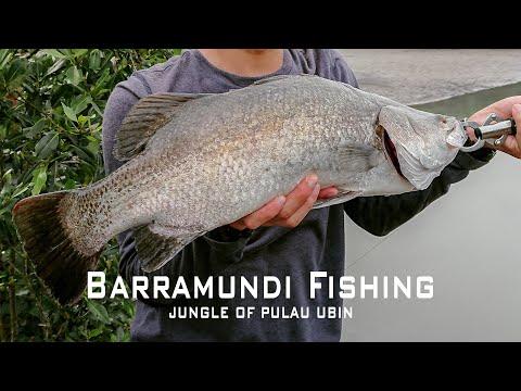 Fishing For Barramundi: Pulau Ubin Campers Vol. 2