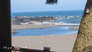 1일1바다 (5박6일) 사랑하는 제주도 여행 브이로그 …