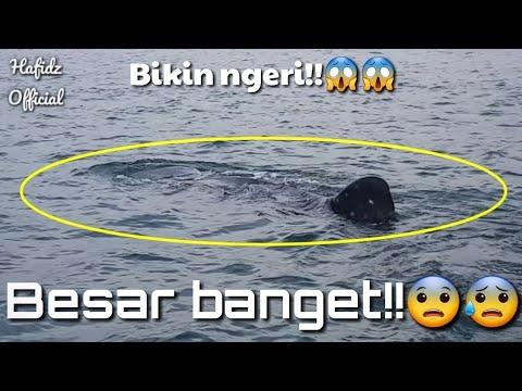 #Ngeriii!!! Penampakan ikan besar di laut