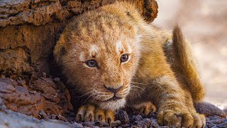 The Lion King  HD 2019     | simba and scar   |   new movies   |   new cartoons | 😍😍👍👍👍👍👍❤️❤️
