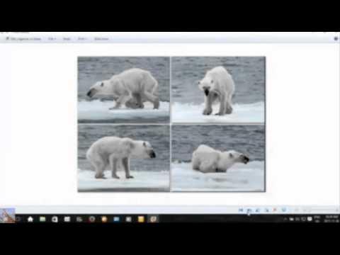 Fukushima: Polar Bears & Marine Ecosystem Collapse (Episode #2)