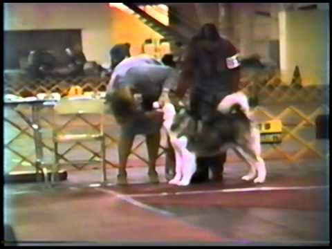 November 1986 Alaskan Malamute Club of Greater Detroit