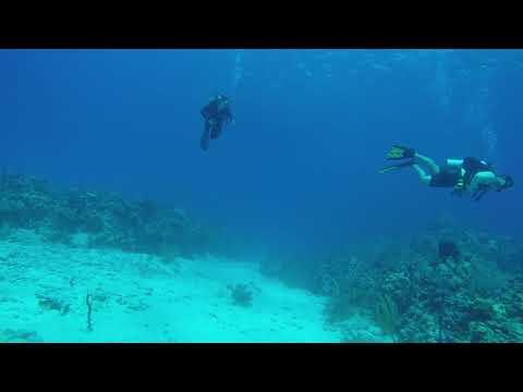 Pierre & Kristin's Grand Cayman dives