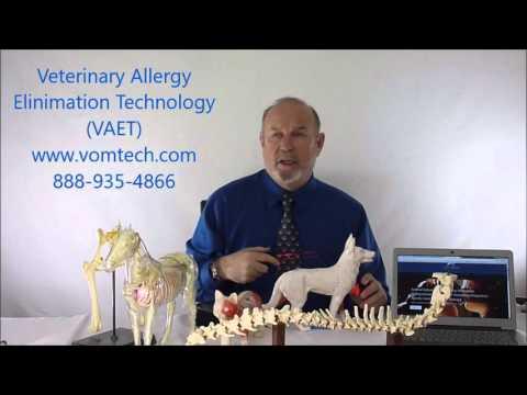 What is Veterinary Allergy Elimination Technology (VAET)?