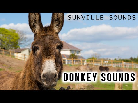 10 Hours of Donkey Sounds