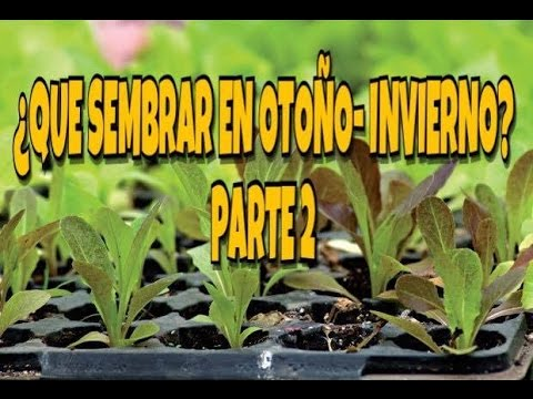 Huerto urbano que sembrar en oto o invierno pte 2 for Huerto urbano que plantar