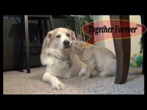 Cats and Dogs together Friends Forever, true love. Funny & Emotional Compilation #1 | King