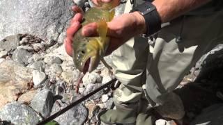 belle truite du vallon de mollières avec jérome