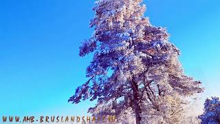 Волшебные деревья Королевской Зимы 2019