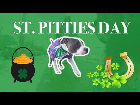 St. Pitties Day Walk | HALIFAX BULLY BREEDS