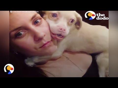 Albino Dog With Rare Disease Never Stops Smiling | The Dodo