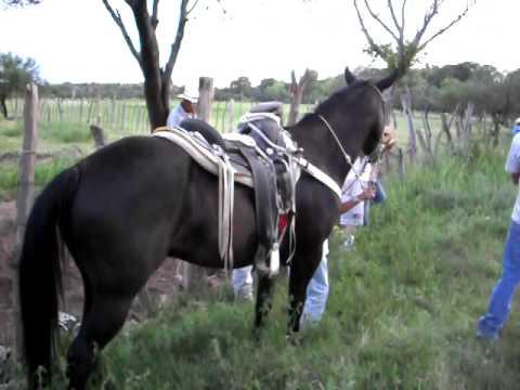 nombre de dios dgo carreras de cavallos - YouTube