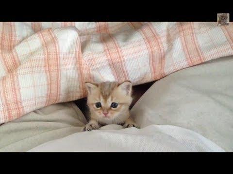 とても人懐こい赤ちゃん猫 Baby Cat So Cute Youtube