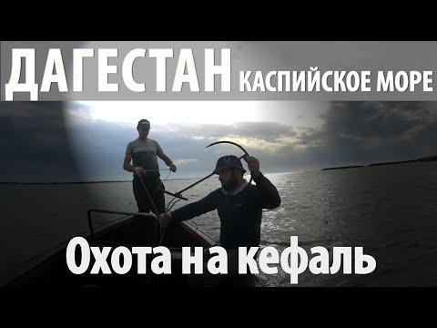 Вытягиваем кефаль сетью. Каспийское море, Дагестан.