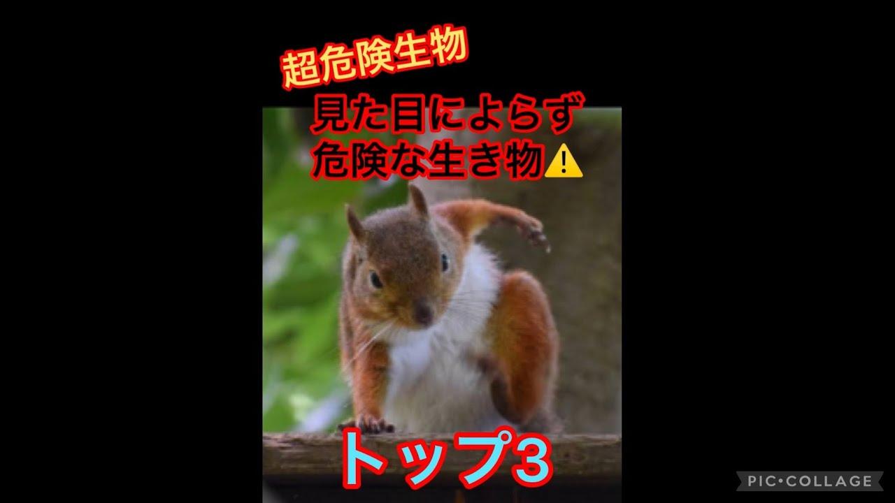 【超危険生物】見た目によらず危険な生き物達!トップ3‼︎