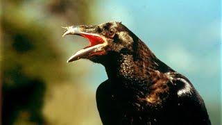 Download El Valle de los Ravens - Los Secretos de la Naturaleza Mp3 and Videos