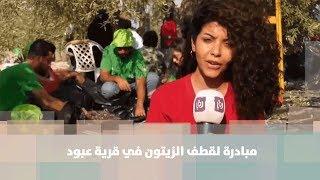 مبادرة لقطف الزيتون في قرية عبود