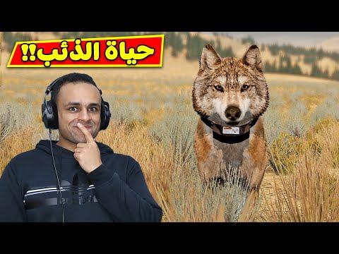 حياة الذئب | Wolf Quest !! 🐺🔥