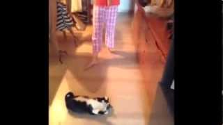 Коты джидаи котячие звездные войны