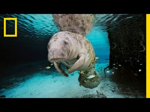 The Mermaid Myth | Nat Geo Live