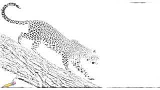 Auto Draw 2: African Leopard, Samburu National Reserve, Kenya