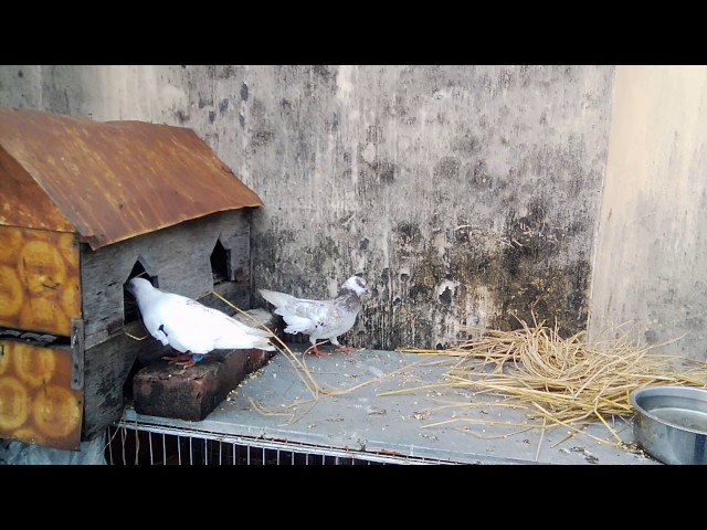 How to Dove making Home