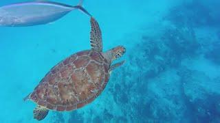 Snorkeling in Cozumel!