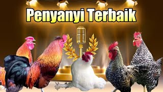 Ayam Nyanyi Edan Turun # Parodi Dangdut Koplo - Ngakak