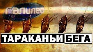 Галилео | Тараканьи бега 🐛 Cockroach running