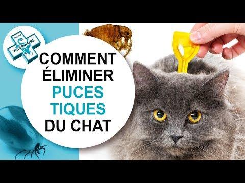 [Tuto Véto] Comment éliminer Puces Et Tiques Du Chat