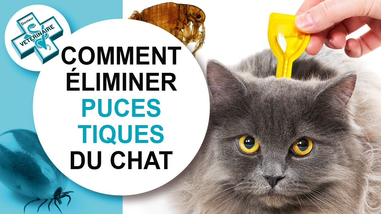 tuto v to comment liminer puces et tiques du chat youtube. Black Bedroom Furniture Sets. Home Design Ideas