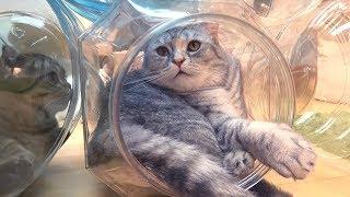 고양이가 좋아하는 집 장만하기