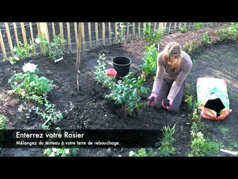 planter un rosier youtube. Black Bedroom Furniture Sets. Home Design Ideas