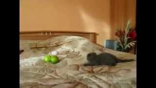 Фильм ужасов про кошек 1 — Яндекс Видео