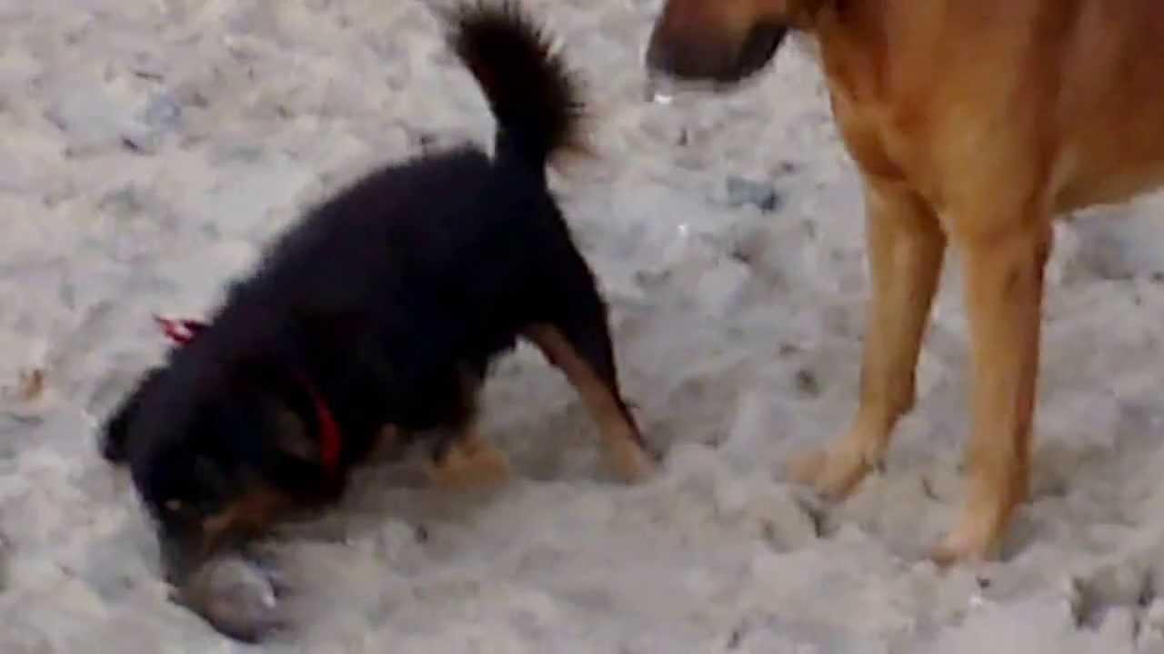 мужики копают собаки крыс ловят