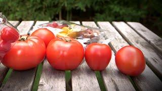 Faut-il arrêter les tomates en hiver ?