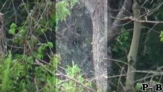 Best Collection Of Bigfoot Videos Of All Time
