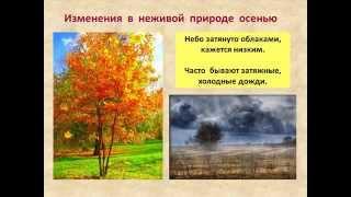 Осенние изменения в природе