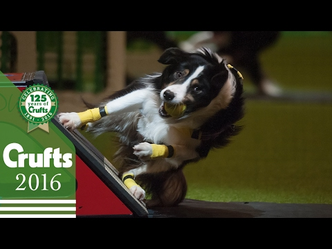 Day 1 Live | Crufts 2016