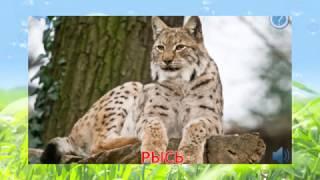 дикие животные видео для детей смотреть бесплатно